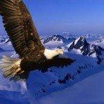 Bases de la libertad